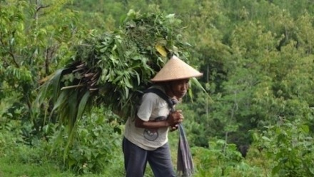 Inequality in Later Life in Rural Indonesia: Filling the Gaps to Meet The Needs of Older Persons